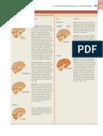 Resumen de Las Funciones Del Encefalo