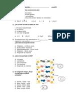 examen ADN 8vo