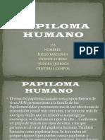 Papi Loma