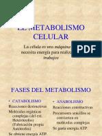 Unidad III. II. Metabolismo Celular