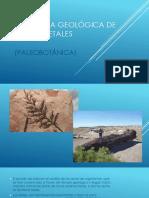 Importancia Geológica de Fósiles Vegetales