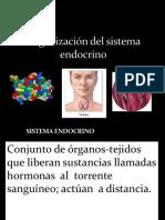 Organizacion Del Sistema Endocrino Parte 1