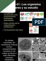 3-01_El estudio de los organelos_BIOQ_2018.ppt
