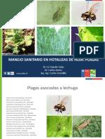 Manejo_sanitario_hortalizas_de_hoja_plagas.pdf