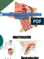 Exposicion de Masticacion y Deglucion