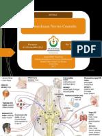 PPT Referat Neuro N.cranialis