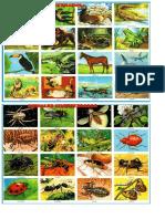 Animales - Imagen