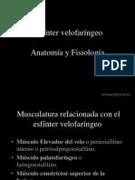 Anatomía y Fisiología Del EVF