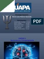 UNIDAD II Neurociencia y Comportamiento (1)