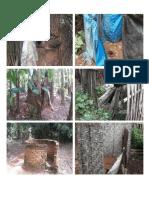 Dokumentas Wc Cemplung Desa Rejo Katon