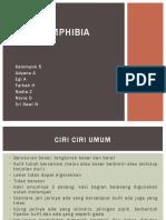 251140 Amphibia Ppt