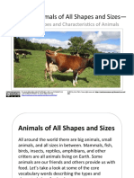 CVWP Animals of All Shapes and Sizes Bundle