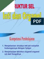 Inti Dan Organel sel