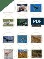 Animales de La Patagonia