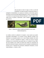 Generalidades de Los Anfibios