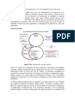 Ciclos_biogeoquímicos