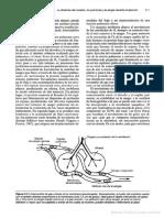 106_Entrenamiento para corredores de fondo y medio fondo.pdf