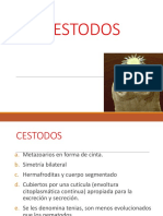 cestodos (2)