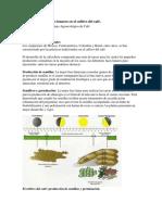 Influencia de las fases lunares en el cultivo del café.docx