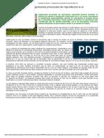 Inmultirea Ovinelor - Organizarea Procesului de Reproductie La Oi