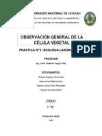 Practica LABORATORIO Celula Vegetal
