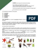 Animales Invertebrados e Insectos