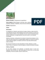 CALAGUALA.docx