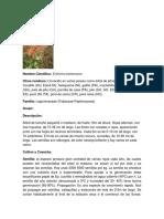 PITO.docx