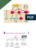 Mapa Conceptual Del Ojo