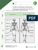 articles-25411_recurso_docx huesos.docx