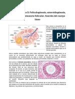 Clase 8 - Función Ovarica II