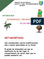 2.Metamorfosis.pdf