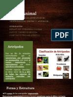 2 Artropodos, Peces y Anfibios (Sebastian G, Jose D y Janicx).pptx