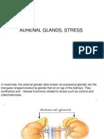 ADRNL STRESS