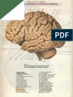 Docfoc.com-Atlas Neuroanatomie - Viorel Ranga.pdf.pdf