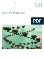 Life in the Palaeozoic Printable