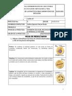 Practica 5 (Mitosis) - Biologia - P 108 - Macas Carlos
