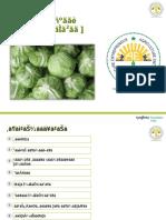 Marathi- Cabbage Ppt