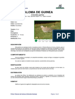 Ficha PALOMA DE GUINEA _Columba guinea_.pdf