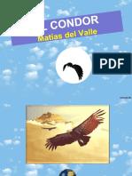 Matias Condor