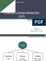 corpus luteum persistem (CLP)