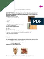 Dermatozoonoses (1)
