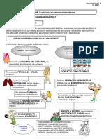 fichas_trabajo_3ESO.pdf