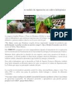 Empresa Familiar Es Un Modelo de Superación Con Cultivo Hidropónico