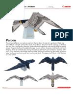 Halcon-Peregrino.pdf