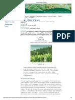 08. Downy mildew of grape.pdf