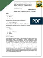 Informe Del Sembrío de Las Hortalizas- Reyes