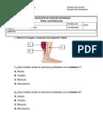 Evaluación de Ciencias Naturales Musculos