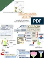 ORGANOGRAFÍA Vegetal 2 Flor Fruto Semilla
