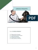 TEMA 2. Orden Primate (Filogenia de Los Primates) Power